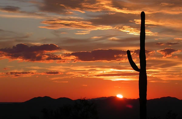 Saguaro-National-Park-Arizona-Stati-Uniti.-Author-National-Park-Service-Digital-Image-Archives.-No-Copyright